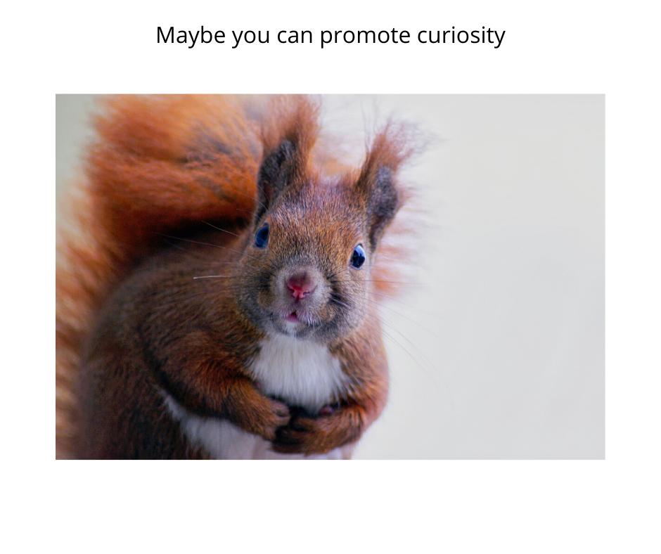 Promoting Curiosity